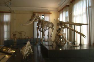Městské muzeum zoologie